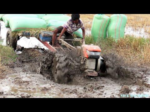 Tractor Transport Rice Across Water & Stuck In Mud | គោយន្តដឹកស្រូវកាត់ទឹកជាប់ផុងទួងកង់ល្អមើលមែន
