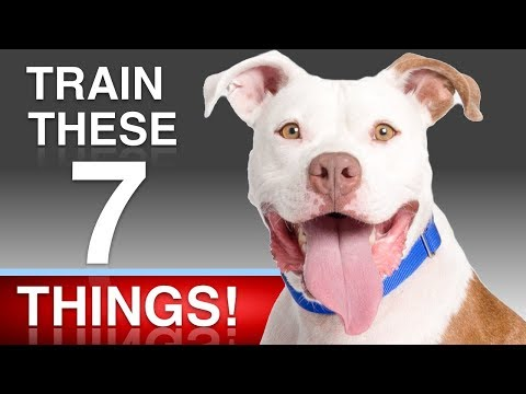 7 Things To Teach Your Dog!