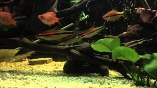 Roseline Shark Hangout
