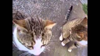 Смешные ролики с кошками