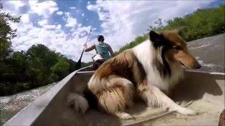 James River Canoe with dogs Horseshoe to Buchanan VA