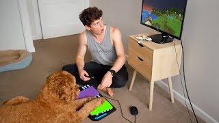 Perro jugando Minecraft