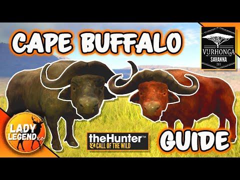 BEST Cape Buffalo HOTSPOTS in Savanna!   Cape Guide!  Hunter: Call of the Wild