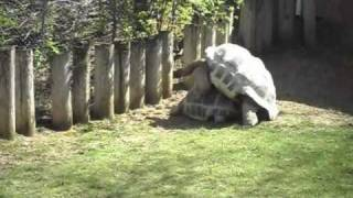 Turtle sex, zoo porn lol