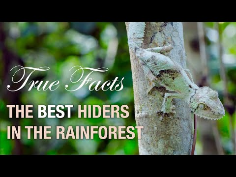 True Facts: Deception in the Rainforest - zefrank1