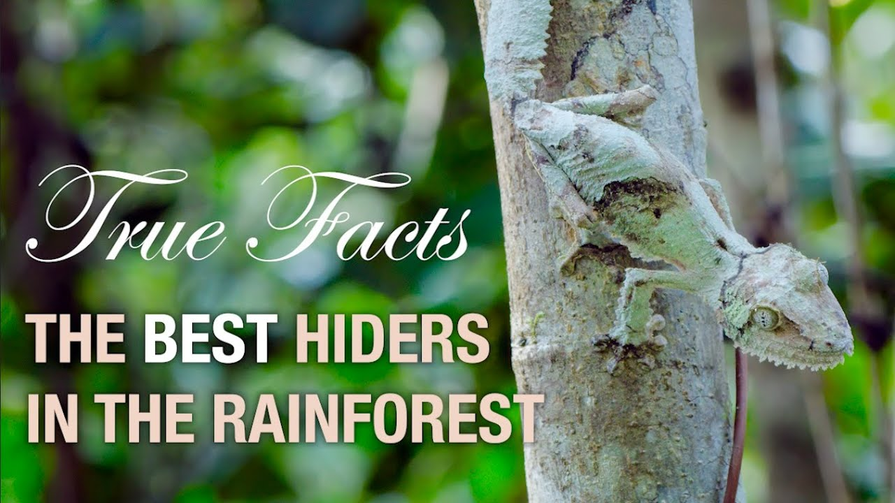 True Facts: Deception in the Rainforest