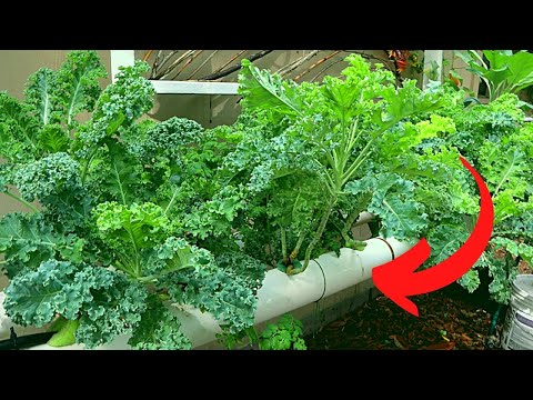 Anyone Can Grow, My NFT System Explained in 5 Minutes, DIY Hydroponics