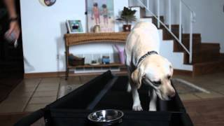 Indoor Exercise For Dogs: Dogtread Dog Training Treadmill By Petzen