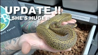 Update On Some Hatchlings Of 2019 !!! Monsoon Update !!