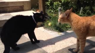 Black cat vs jetty