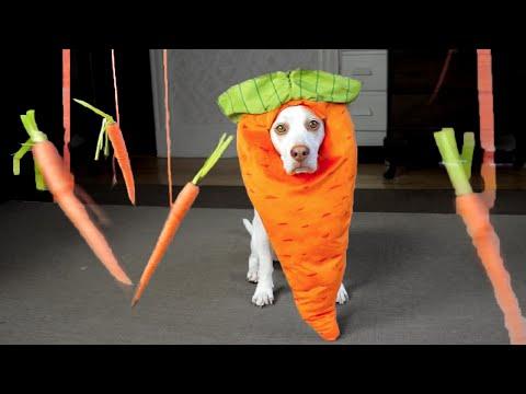 Carrot Dog vs. Floating Carrots: Cute Dog Maymo
