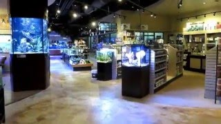 Fish Gallery Houston Tx.