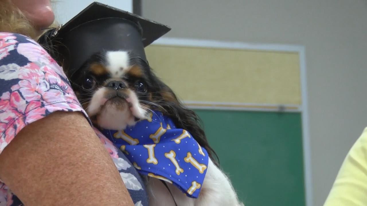 Dogs Wearing Caps and Gowns Graduate From Pet Therapy Program - YouTube