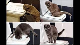 лоток для кошки на унитаз