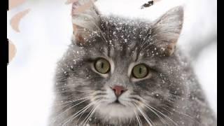 Зоомагазин корм для кошек