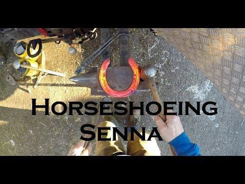 Horseshoeing Senna