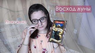 ВОСХОД ЛУНЫ / КОНКУРС / Коты-Воители // CrazyTulipkin