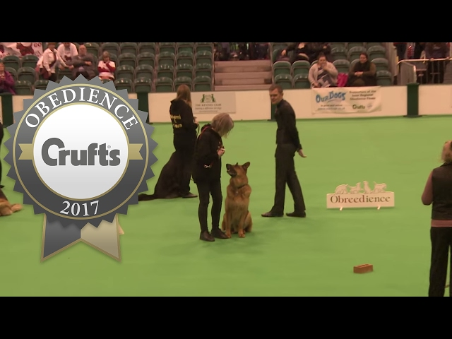 Obreedience - Scent - Part 5 | Crufts 2017