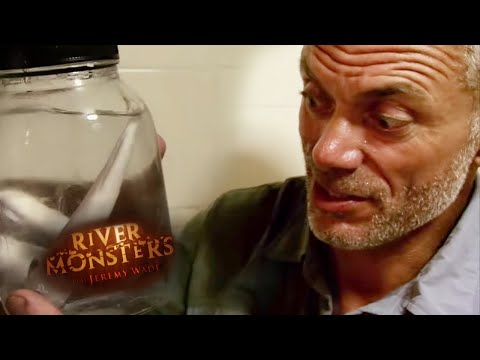 Eaten ALIVE By Candiru Asu | HORROR STORY | River Monsters