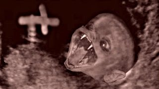 """Gambar cover """"Devil Baby"""" House In Chicago - Super Creepy!"""