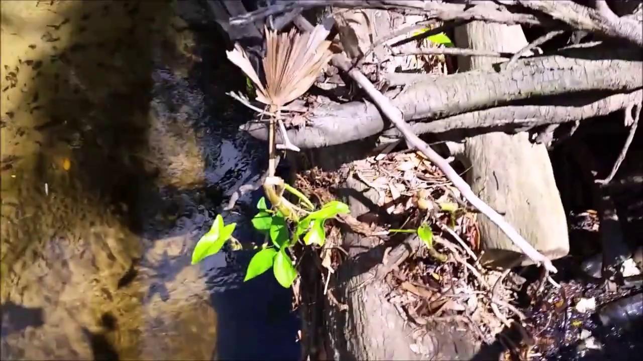 Micro Fishing Sanlando Park Altamonte Springs Fl 22817 Youtube