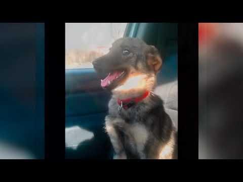 Собаку погладили впервые в жизни, на такое невозможно смотреть без слёз