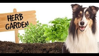 Grow Herbs and Plants for your Lovely Pets Health @ FarmingCosmos