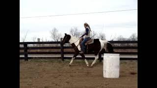 Zorse For Sale >> Zorse For Sale Zebra Horse Gelding Gentle Been Used In