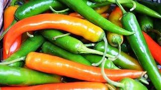 Chilli farming (हरी मिर्च की खेती) In Baatein Kheti Ki - On Green TV
