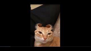 Śmieszne Koty 2019 Padniesz Ze Śmiechu Funny Cats Best of The Best #1