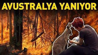 Avustralya yangınlarında 480 milyon hayvan telef oldu