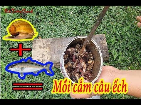 Bắt ếch đồng - Làm mồi cắm câu ếch đơn giản chỉ với ốc bu vàng - Khắc Trường Channel