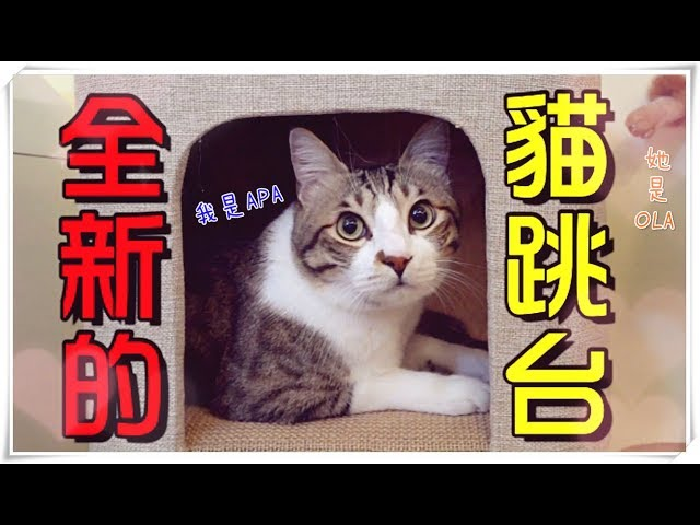 【魚乾】又有新跳台了!質感上升,貓咪買單嗎?(Feat. 胡子)