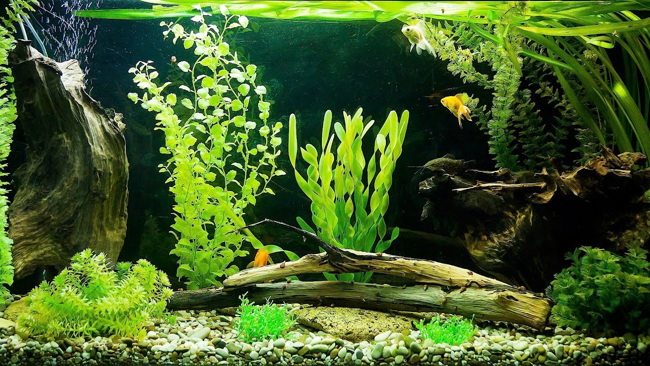 Why Is Your Filter Not Pumping Water Aquarium Care