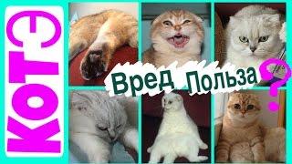 Смешные кошки. Прикольные домашние котэ. [5]