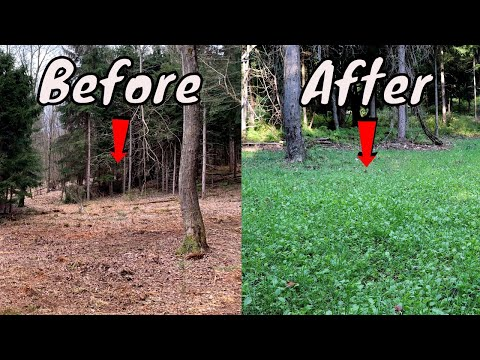 Learn How To Make A Food Plot With No Heavy EQUIPMENT!!