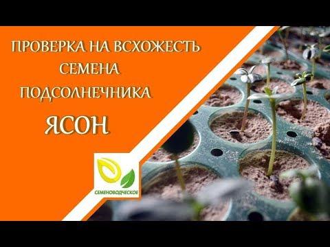 Семена подсолнечника сингента: нк роки, арена пр, нк брио, нк неома, опера пр, нк армони, нк конди, нк мелдими. Купить, цена на семена.