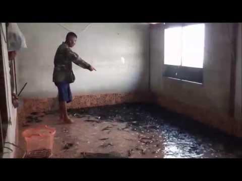 น้ำเน่า ! น้ำตาตก ใช้ห้องนอนลูกสาวเลี้ยงปลาดุกแทนกระชัง