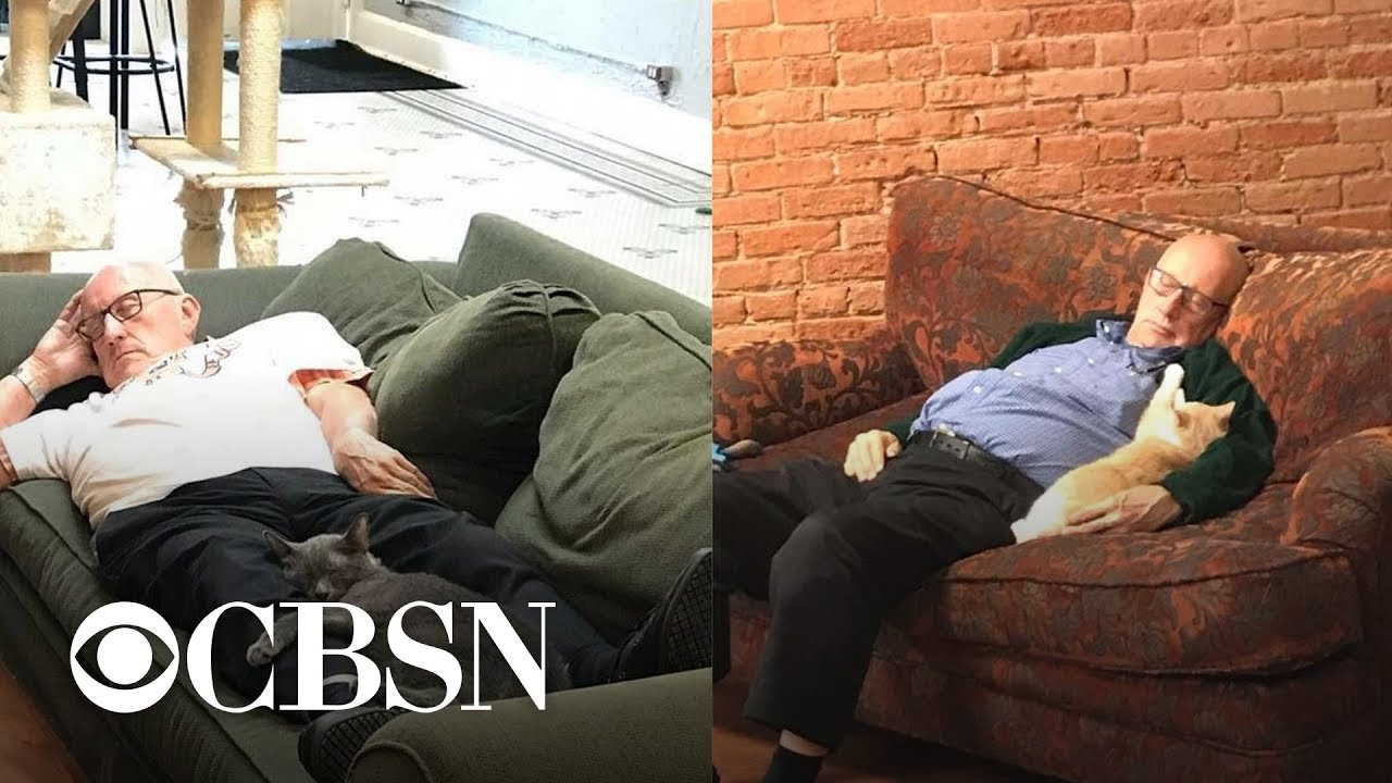 75-year-old man who naps with cats while volunteering goes viral