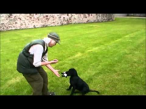 Delivery to hand with clicker training