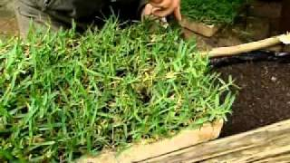 Pasella | Gardening Tips | Patch of grass for apartment