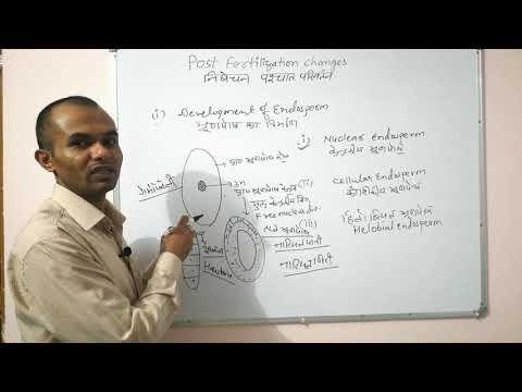 post fertilization changes Endosperm /भ्रूणपोष निर्माण Embryo/भ्रूण निर्माण from YouTube · Duration:  37 minutes 35 seconds