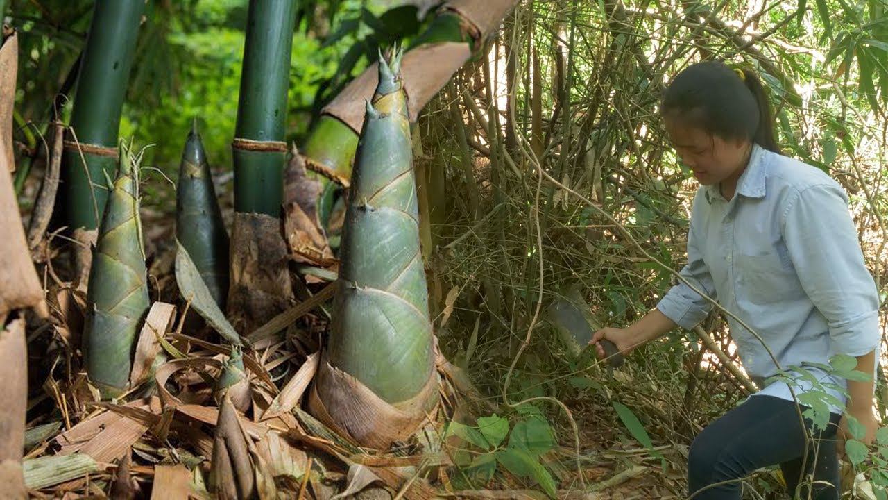Survival Found Bamboo Shoot - Bamboo Shoot Cooking In Rain-forest