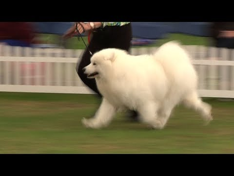 Southern Counties Dog Show 2017 - Best Veteran in Show