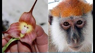 10  УДИВИТЕЛЬНЫХ  РАСТЕНИЙ (Природа и растения)(Природа не перестает удивлять нас своей фантазией и воплощениями. Удивительное растение было обнаружено..., 2015-12-01T09:48:48.000Z)