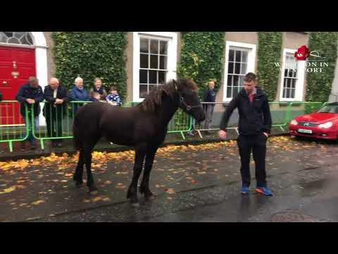Westport Horse Fair 14/10/2017