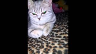У кошки меняется цвет глаз