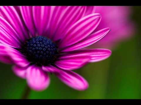 Tiesto Vs. Doni & Momchil And Kanaleto - Carpe Noctum In Violet (Higher Devotion MASH)