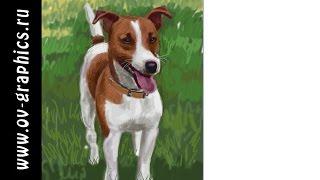 Рисуем собаку в Adobe Photoshop