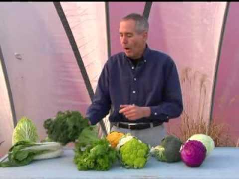Cold crops vs. cole crops